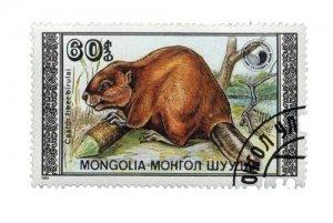 biber_mongolia_600_web