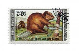 biber_mongolia_60_1_web