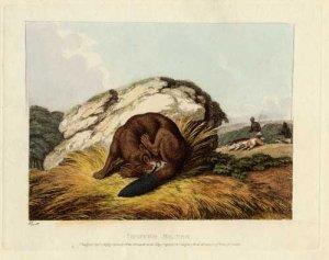 biber_aesop_howitt_hunted_beaver_1811_web