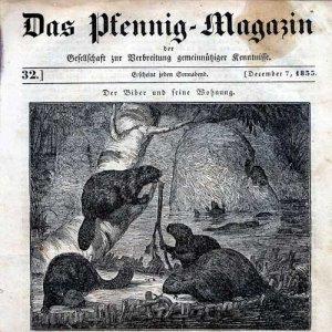 biber_pfennigmagazin_web