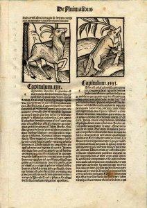 biber_grafik_hortus-sanitatis_1497_vorne_web1