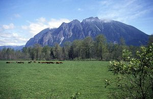 640px-mt_si_and_meadowbrook_cows