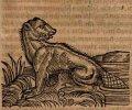 albertus-magnus-von-art-natur-vnd-eygenschafft-der-thierer-1545
