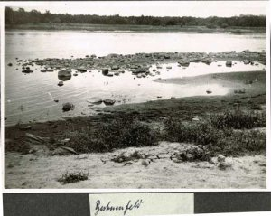 elbebiber-biberspuren-im-buhnenfeld-an-der-elbe-1946