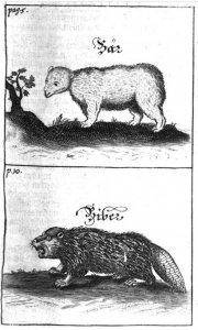 georg-a-mercklein-neu-aussgefertigtes-historisch-medizinisches-thier-buch-1714