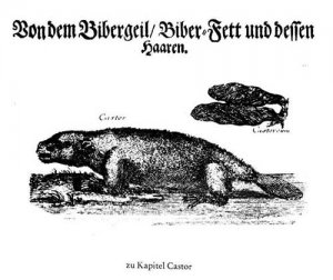 von_dem_bibergeil_arzneimittelgeschichte_schneider_1968