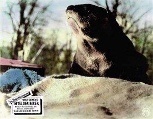 disney-film-im-tal-der-biber-1950-aushangfoto