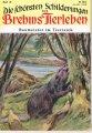dunkel-baumeister-im-tierreich-1954
