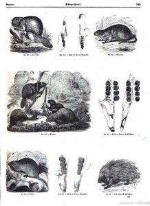 illustrirte-naturgeschichte-des-thierreichs-1847