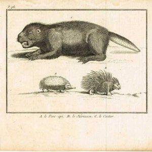 pluche-le-spectacle-de-la-nature-1736