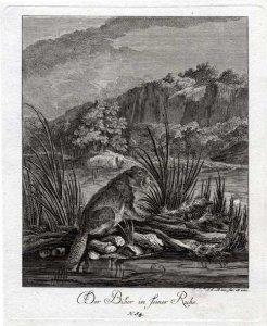 ridinger-der-biber-in-seiner-ruhe-1738
