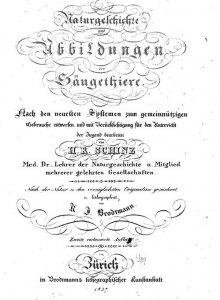 schinz-naturgeschichte-und-abbildungen-der-saeugethiere-1827
