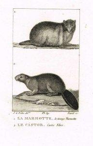buffon-der-biber-das-murmeltier-1826