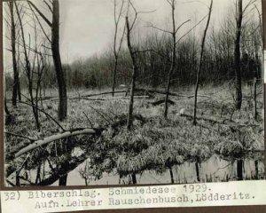 elbebiber-biberschlag-schmiedesee-1929