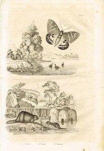 guerin-meneville-dictionnaire-pittoresque-1834