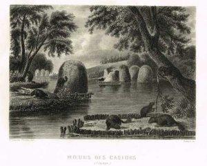lacoste-chollet-aubert-moeurs-des-castors-1860