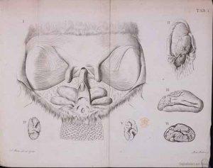 Anatome_castoris_atque_chemica2_1806
